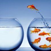Conheça melhor a gestão de desempenho